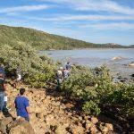 Prefeitura de Búzios retira carcaça de baleia do Mangue de Pedra