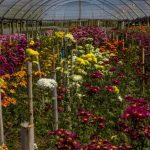 Expectativa de venda de flores no Estado do Rio aumenta em 60% com o início da primavera